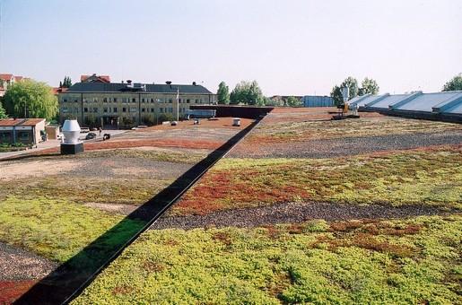 Gróður á þökum (Green roofs) – Augustenborg's Botanical Roof Gardens