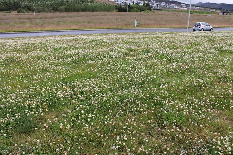 Sjálfbærni gróðurs í þéttbýli