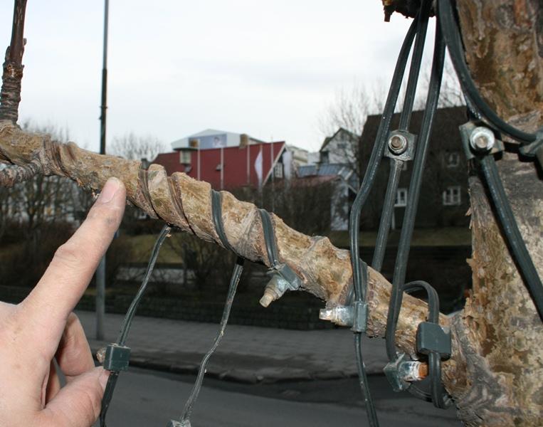 Jólaljós í trjágróðri